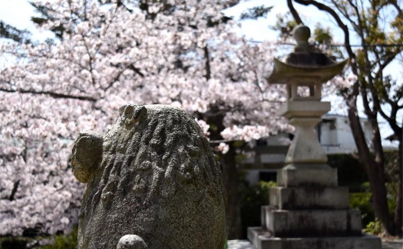 広沢町の日枝神社の狛犬と桜