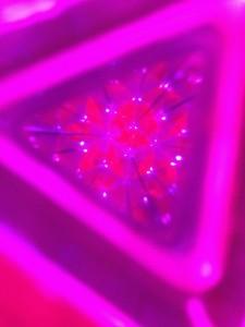 アートアクアリウム 2012での万華鏡からの金魚